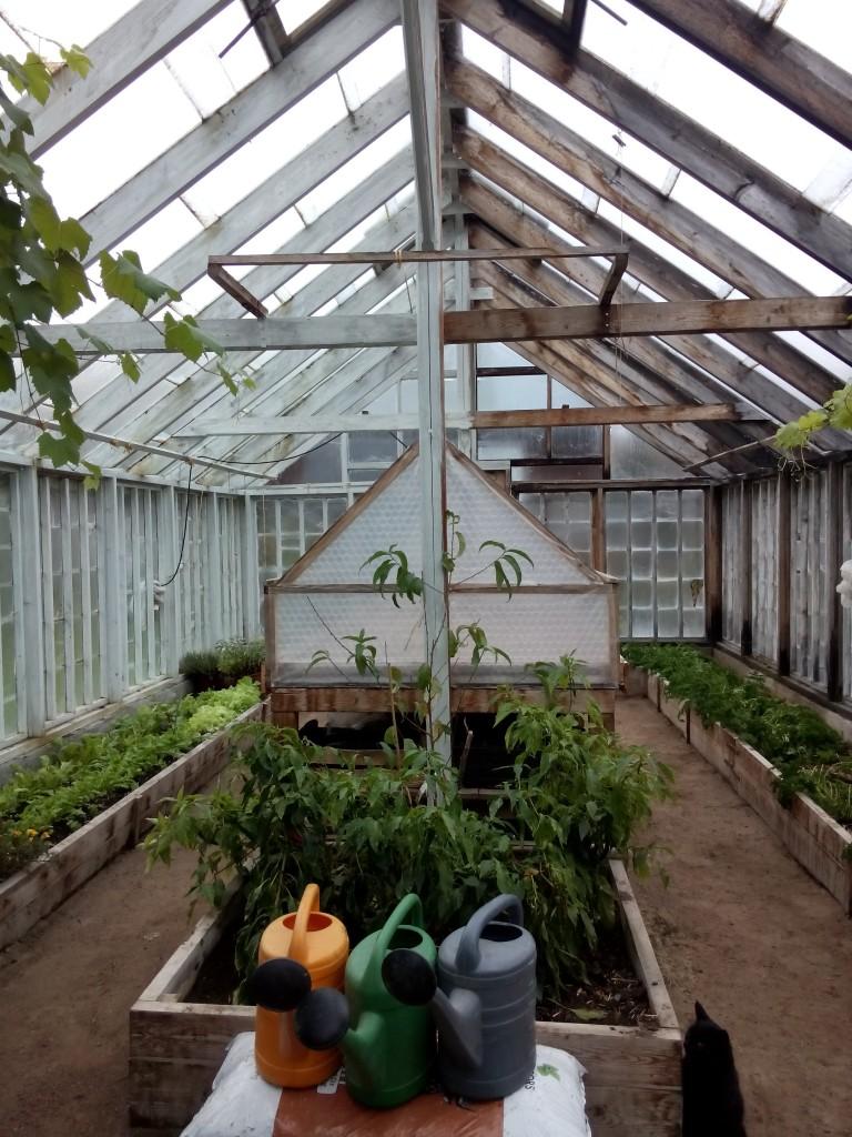 Odling i växthus